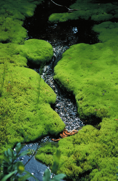 A tiny creek babbles through a vivid layer of greenery.  The upper half of the picture is in shadow.