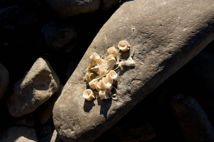 Aquatic organisms dry out on a rock in the sun.