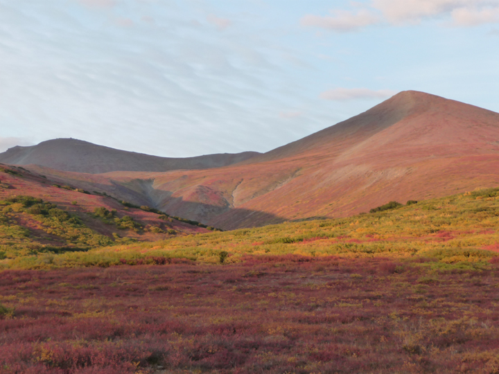 Tundra in bloom in a valley; reds and glorious greens all nestled in the shadows cast by the setting of the sun.