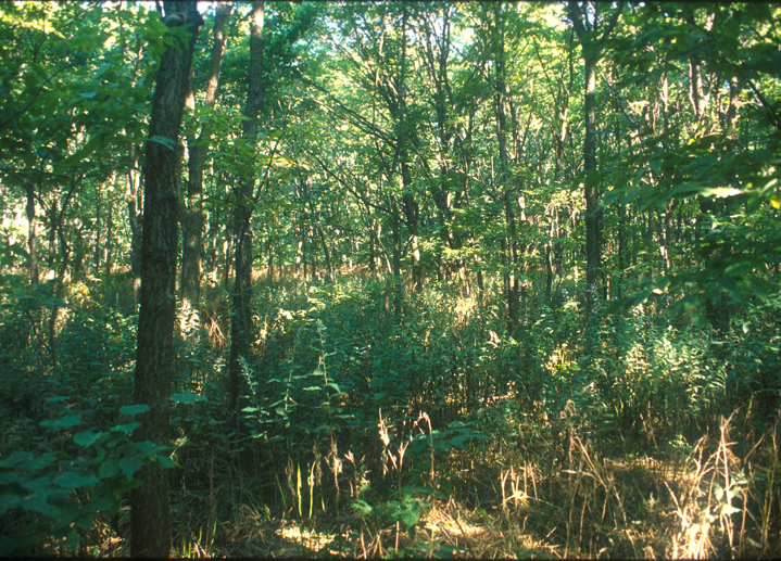 A vast array of greenery makes up this shot of the island forest.