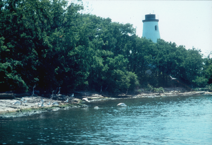 A lighthouse rises above the coastal treeline, its white shape a sharp contrast against the greens of the trees and the blues of the sea.