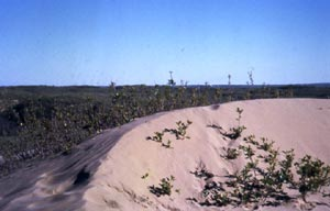 A small dune of white sand, dotted with green brush, looking out over open grassy hills.
