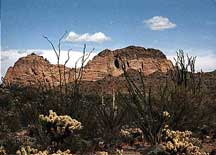 Photograph taken in  the New Water Mountains Wilderness