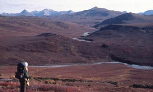 A lone backpacker standing above a river valley, looking out over the rolling tundra below, in the faded red of autumn color.