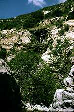 Photograph taken in  the San Gabriel Wilderness