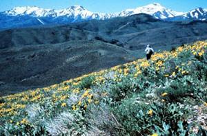 Photograph taken in  the Santa Rosa-Paradise Peak Wilderness