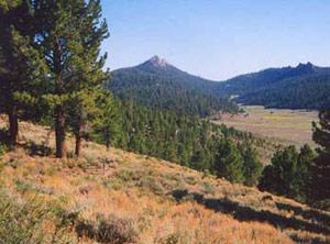 Photograph taken in  the South Sierra Wilderness