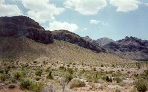 Photograph taken in  the Stateline Wilderness
