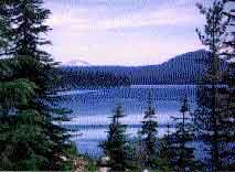 Photograph taken in  the Waldo Lake Wilderness