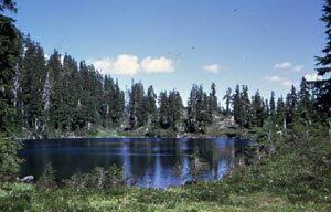 A small alpine lake, surrounded by tall trees under a blue sky.